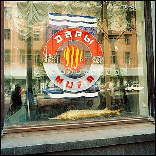 рыбный отдел, магазин рыбы, дары моря, оформление витрины, советский союз, годы СССР, фото, магазины по продаже рыбных изделий, живая рыба магазин, картинки